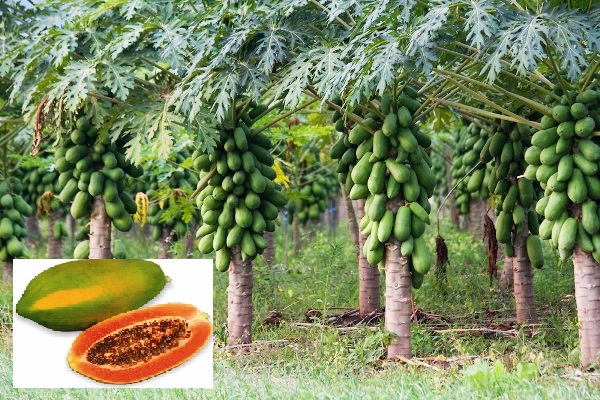 fruits price in india